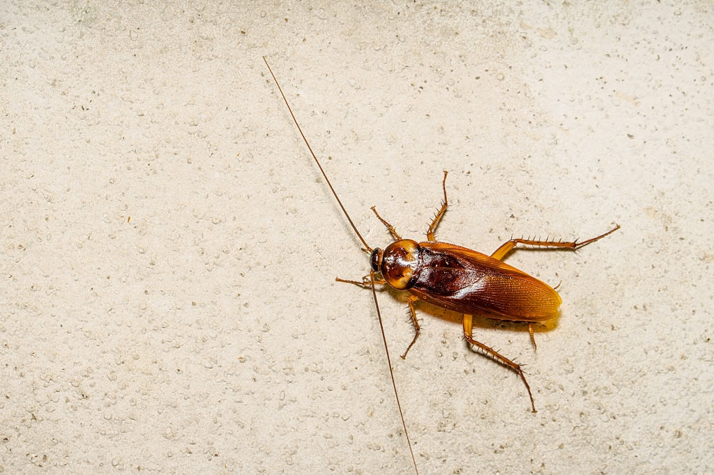 Cockroach Control, Pest Control in Tottenham, N17. Call Now 020 8166 9746
